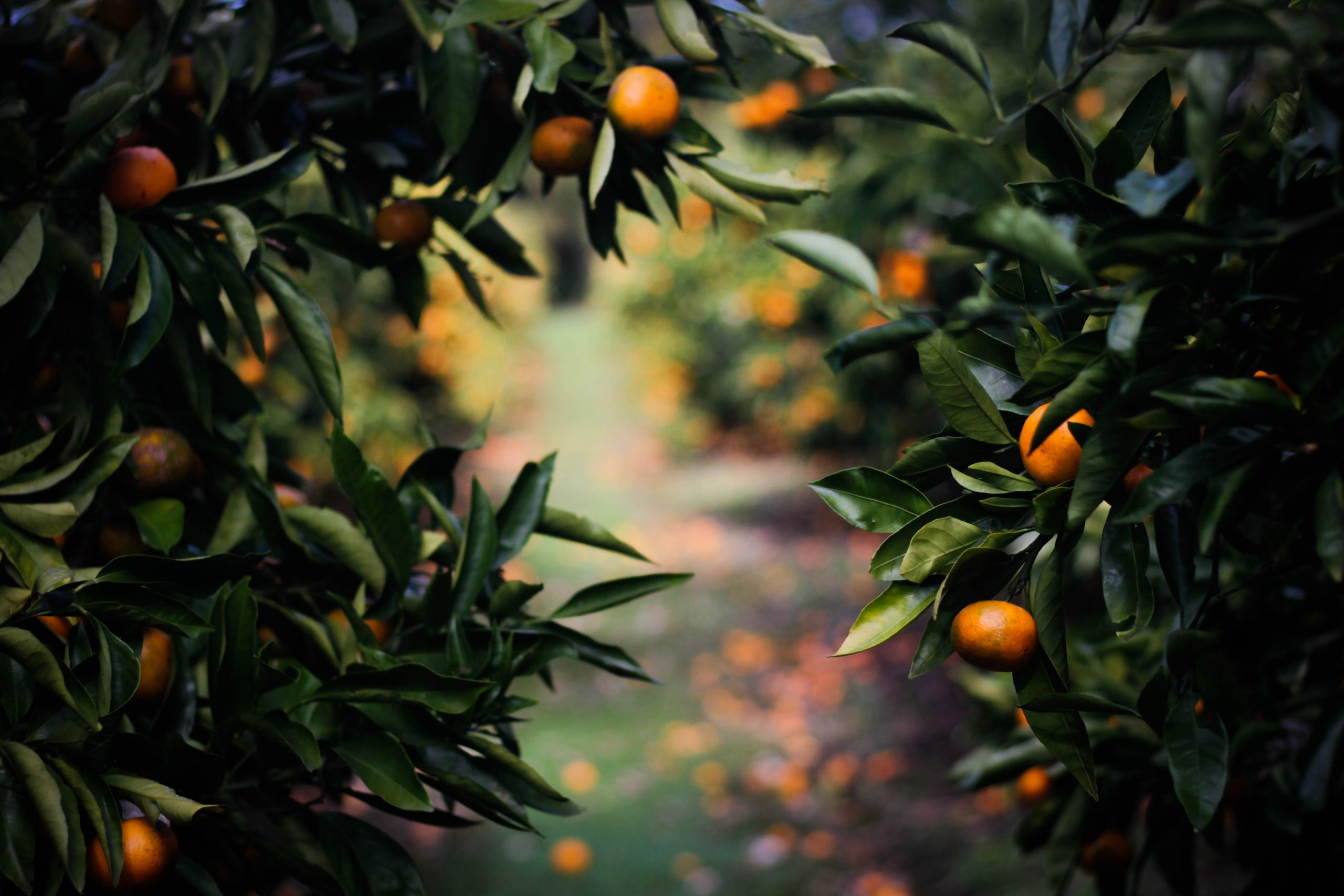Letter from a future where parks are lined with fruit trees